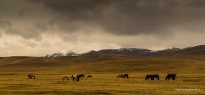 *** весна монголия лошадь пейзаж
