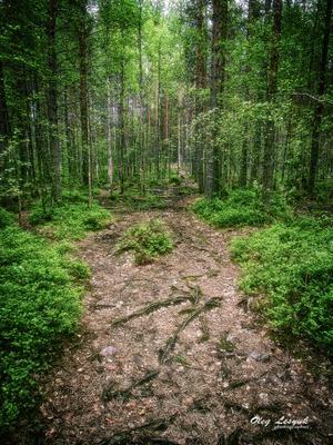карелия карелия линдозеро природа