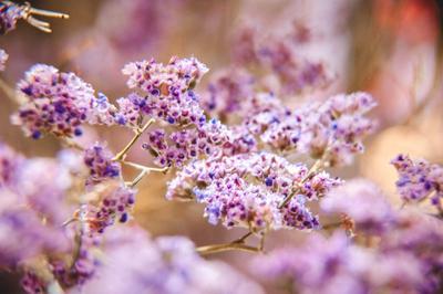 ***Степные цветы