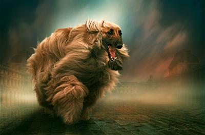Where Did The Wind Dog Run