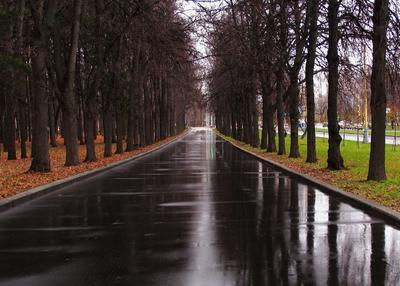 *** парк МГУ ноябрь асфальт после поливалки Москва осень
