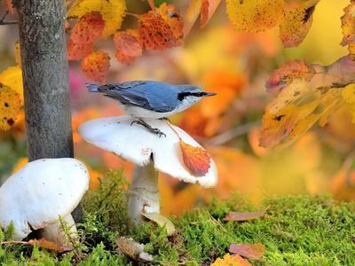 В осеннем лесу 2 природа птицы фотоохота поползень осень грибы