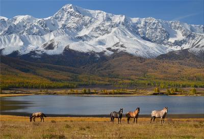 На озере Джангысколь Алтай Ештыкёль Джангысколь озеро осень отражение горы Северо-Чуйский хребет