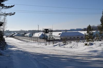 Зона лес природа зима снег деревья январь зона лагерь вышка зека
