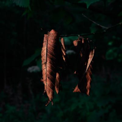 Листья ллистья лес природа