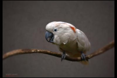 Не ждали?... птица попугай перья клюв