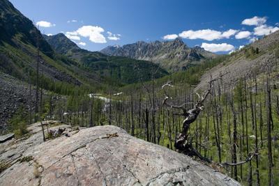 спускаясь с Мюшту Алтай горы лес горельник скала