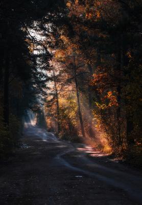 Осенним утром на лесной дороге Природа пейзаж свет дорога
