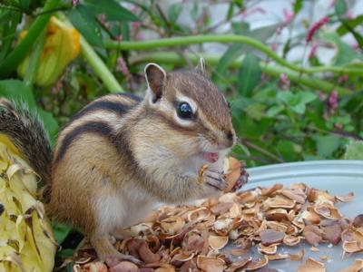 *** бурундук орешки