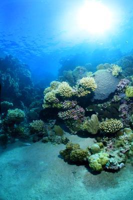 Дахабские кораллы