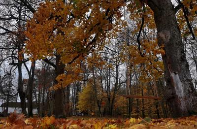 Осень в Сагади. Эстония