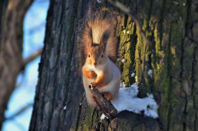 ПРИНЦЕССА ЛЕСА природа дерево белка