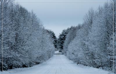 Дорога сквозь зимний лес зима лес дорога
