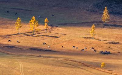 горная долина пейзаж Алтай горы лошади