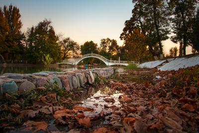 Увядший парк парк осень озеро мост лес закат деревья