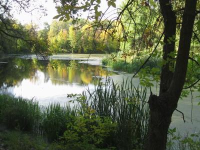 Осенние зарисовки. На озере.