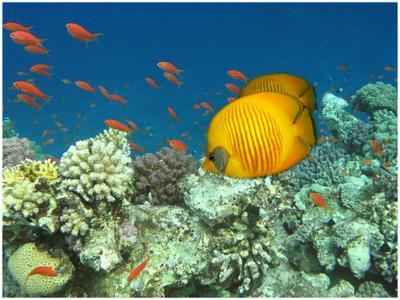 подводная открытка