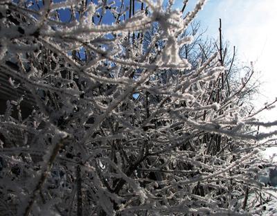 Переплетение снег, зима, иней