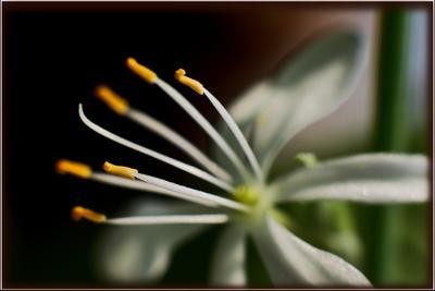 Большая нежность в маленьком цветке