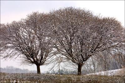 Двое..  киев, ботанический, сад, зима, снег, деревья, двое, холодно