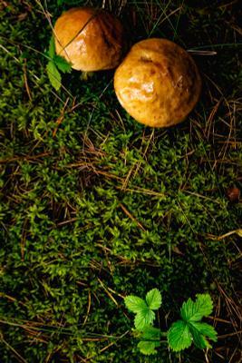по грибы и ягоды грибы лес