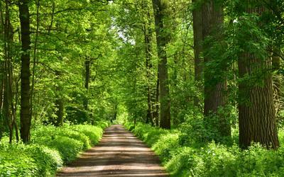 Под сенью весенней листвы! весна лес зелень листва дорожки