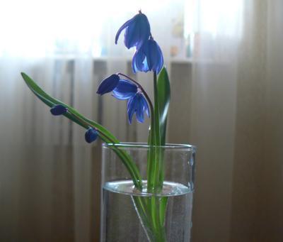 нежность цветы подснежник нежность фото макро свет скоро весна