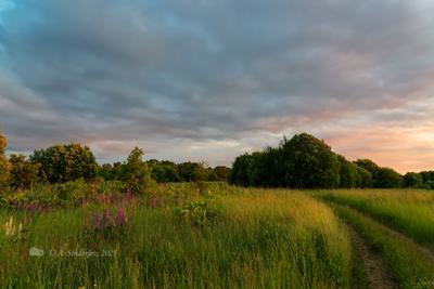 Закатный пейзаж летний пейзаж закат люпины в поле