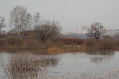 Перемена весна река деревья город