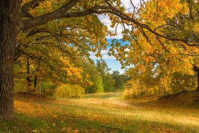 Добро пожаловать в золотую осень