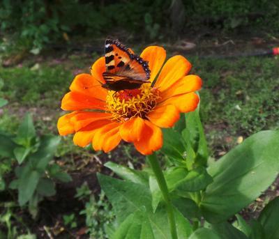 Бабочка..