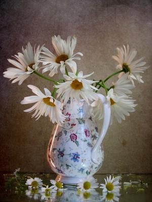 *** цветы букет ромашки наталия тихомирова celesta