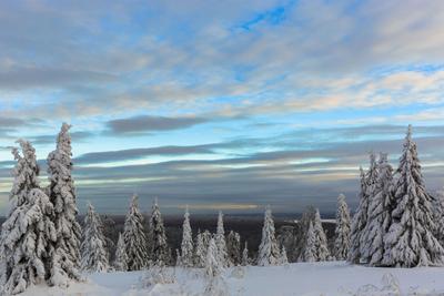 *На склоне дня* снег деревья небо