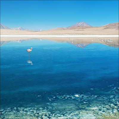 Небесное зеркало. боливия латинская америка альтиплано пшишылны путешествие пейзаж лагуна озеро