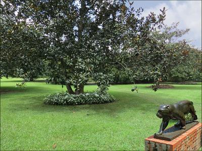Магнолия и ягуар Brookgreen Gardens