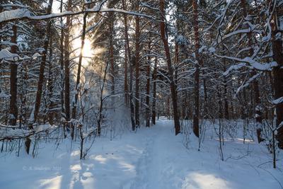 Снежный взрыв на солнце зимний пейзаж снег природа
