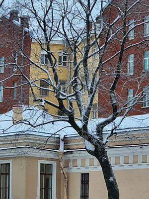 Зимняя классика Питера Питер дерево зима двор