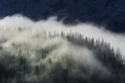 Утро в Эрвальде Ehrwalder Alm туман лес утро горы Эрвальд Тироль Австрия Ehrwald Tirol