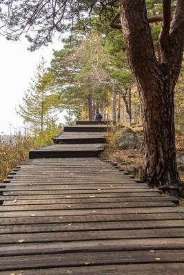 ТРОПА лес природа столбы осень