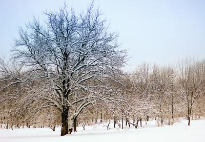 Зима на Лысой горе... зима киев лысая гора декабрь январь февраль kiev hiver