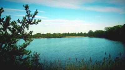 Озеро Озеро Вода Куст Природа