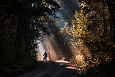 Пробираясь сквозь солнечный свет Природа пейзаж силуэт свет