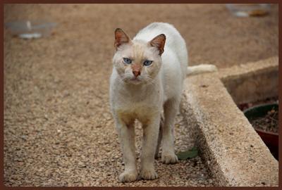 Рождённый на задворках... кот