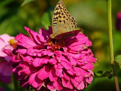 * природа цветы бабочки