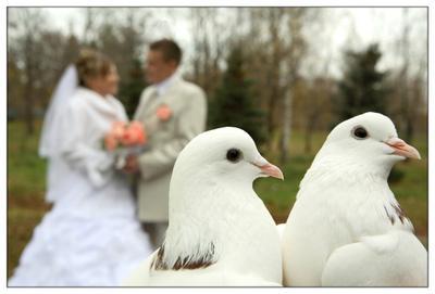 Любовь и голуби (осенняя) любовь, свадьба, голуби.
