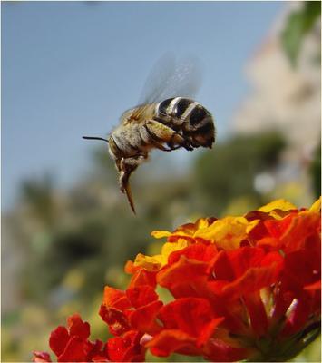Я Буратино, и я летаю! (2)