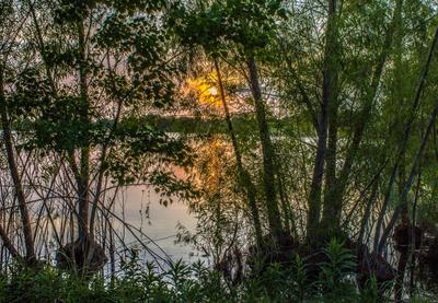 Закат сквозь ветви HDR закат озеро контрсвет ветви