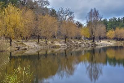 Последние дни осени Осень природа деревья озеро прогулка