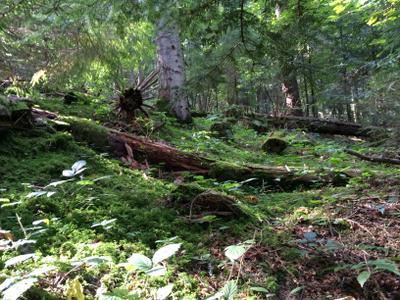 Лес Дикий лес