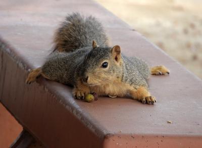 Это моя скамейка, и это мои орехи! белка Лос Анджелес Калифорния